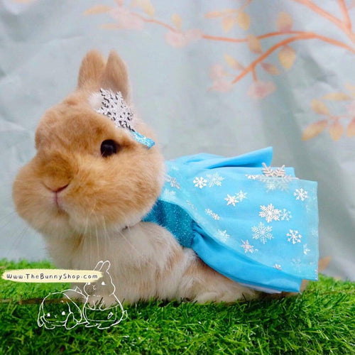 Frozen costume dress for pet bunny rabbit, pet bunny harness, rabbit harness, Elsa and Anna dress Harness Harness