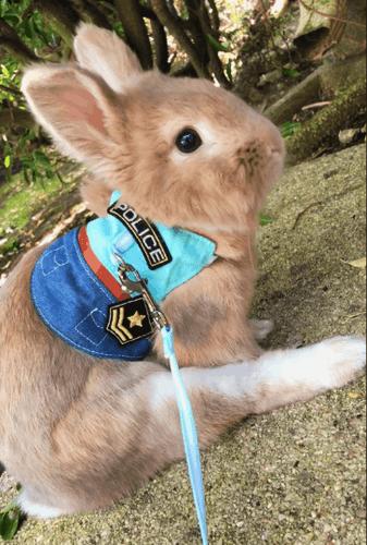 Pet harness, police harness for pet, police costume, superman outfit, secret life of pets bunny outfit Harness Harness