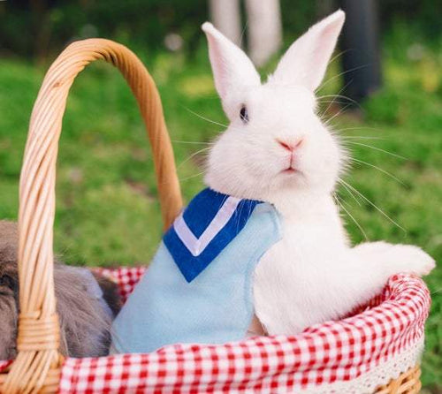 Sailor harness shirt for pet bunny Harness Harness