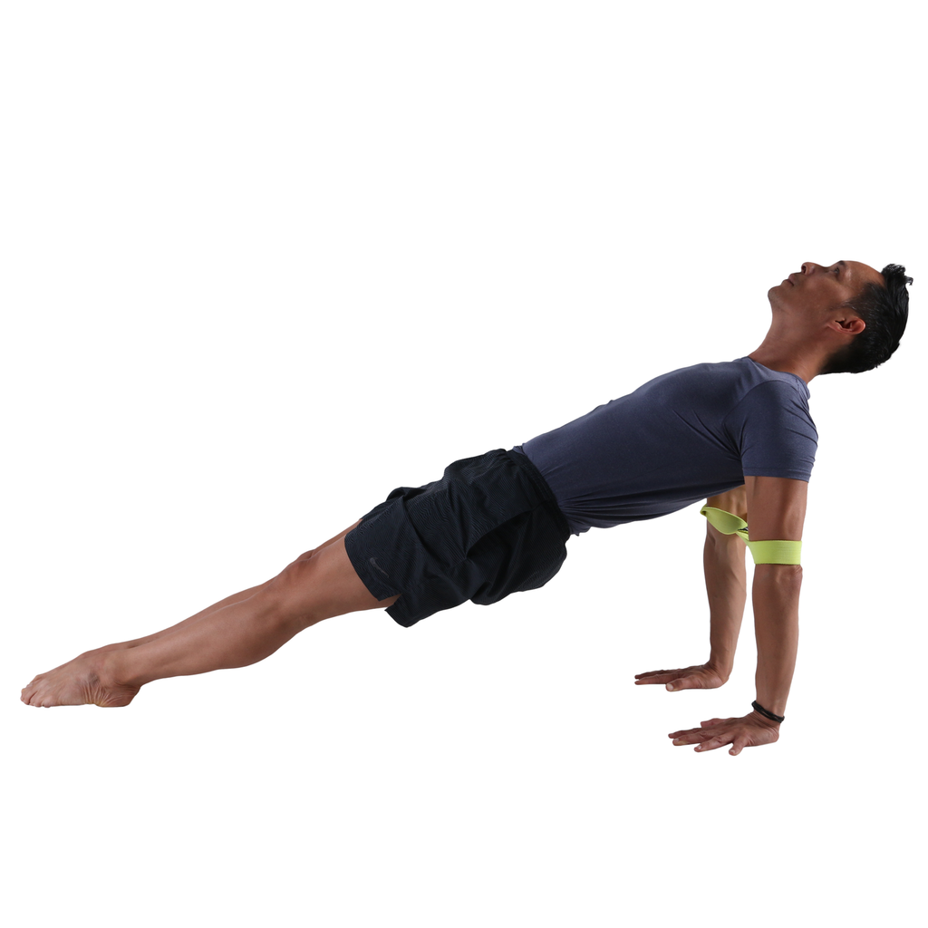 Upward Plank with the Medium PTP Yoga 8Loop