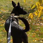 DUO 'ADAPT' Control Dog Harness
