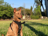 DUO 'DIRECT' NO PULL Dog Harness