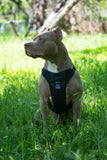 DUO 'AMERICAN ADAPT' Control Dog Harness
