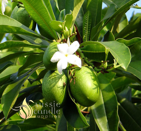 Mango Tree Natural