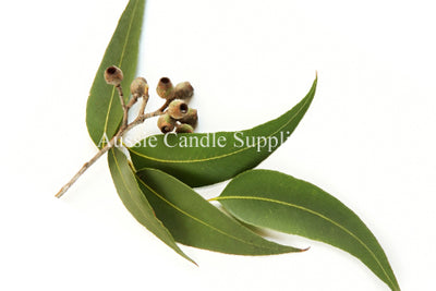 Eucalyptus Blue Gum Oil