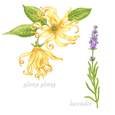 French Lavender Ylang Ylang Natural FO