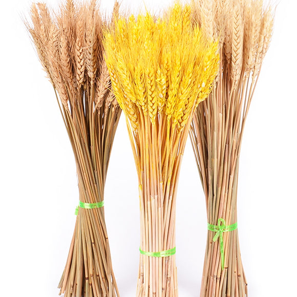 50Pcs/lot Real Wheat Ear Flower Natural Dried Flowers for Wedding Party Decoration