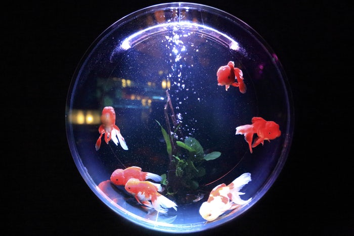 Round shaped Fish tank
