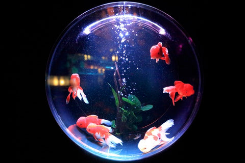 products/BI-048_Fish_Tank_Shop_Images_by_Business_Titans_1.jpg