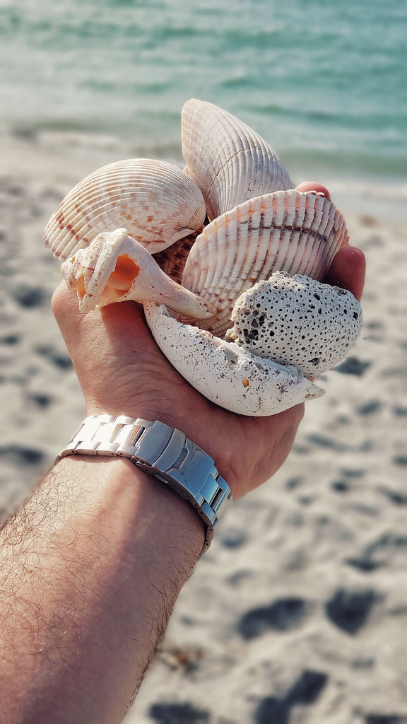A man holding Seashell at seashore