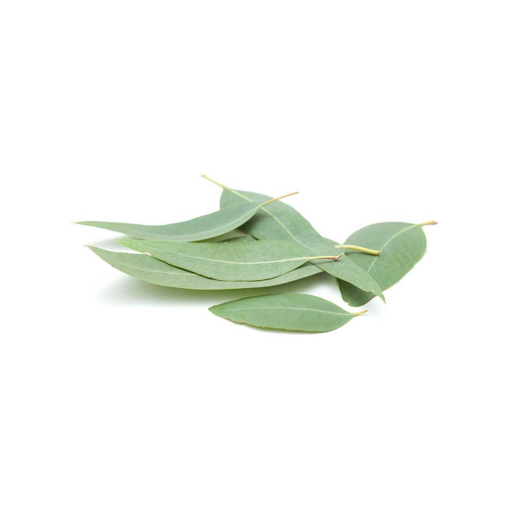 Eucalyptus  Essential Oil 15ml