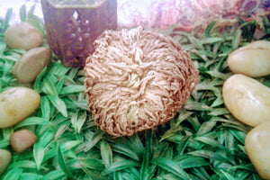 Rose of Jericho Flower (Large)