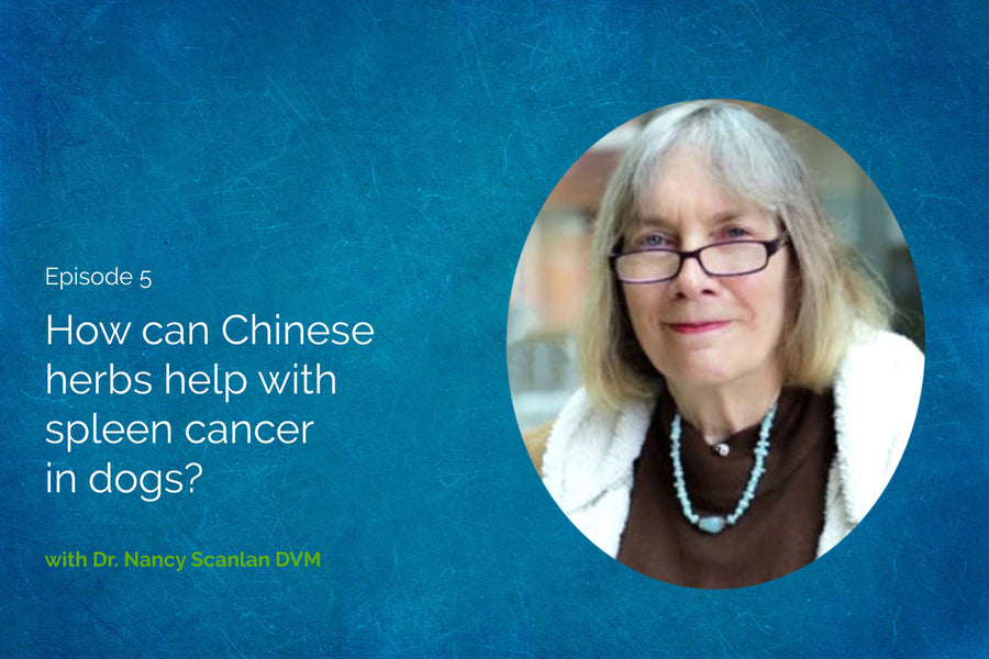 How Can Chinese Herbs Help with Spleen Cancer in Dogs with Dr. Nancy Scanlan DVM