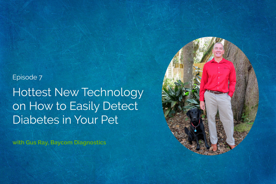 Hottest New Technology: How to Easily Detect Diabetes in Your Pet