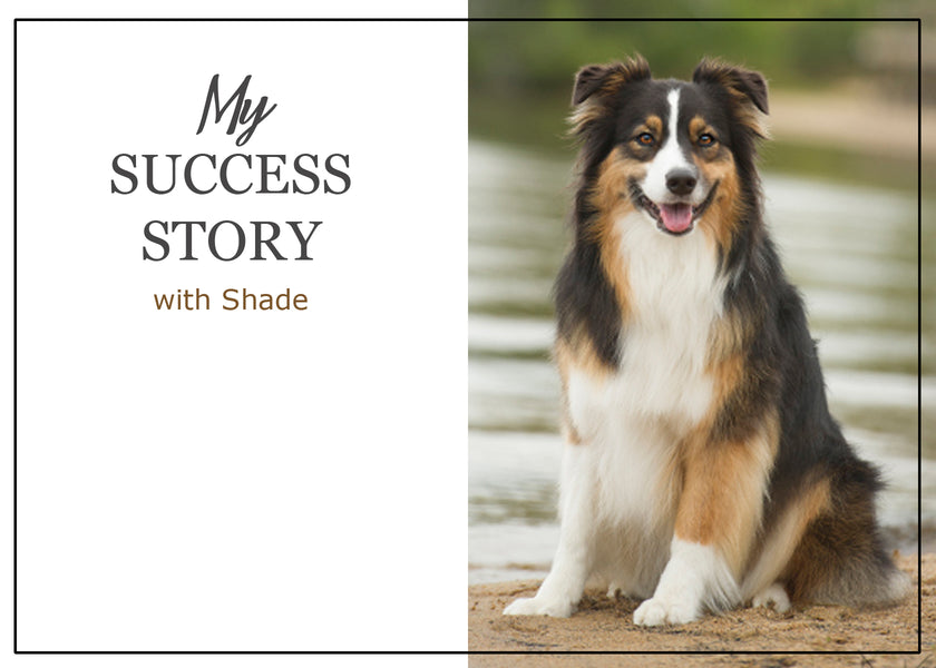 Success Story: Shade