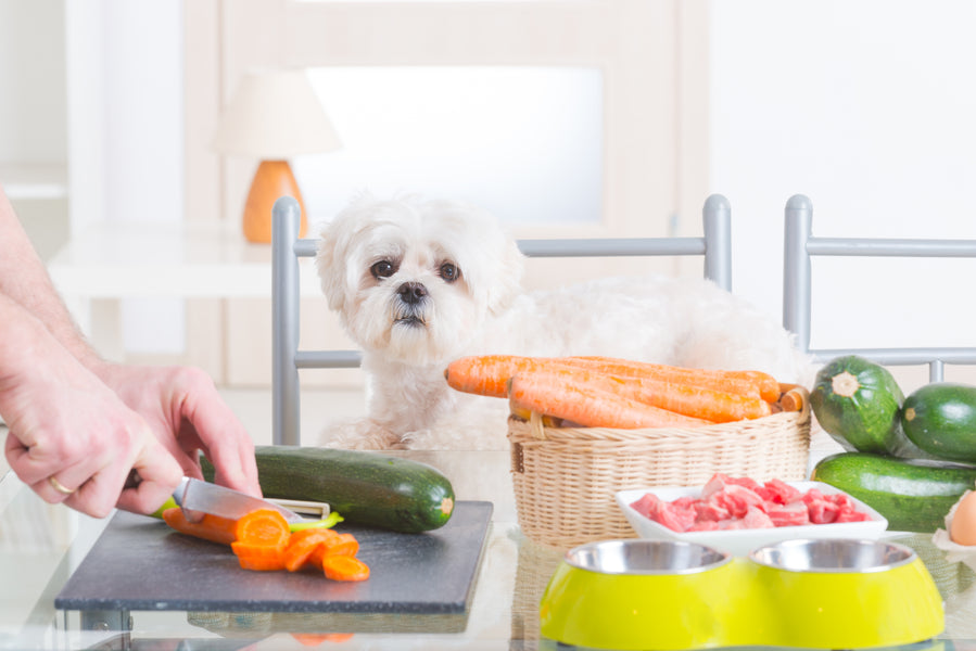 Get Your Dog's Nutrient Report Card