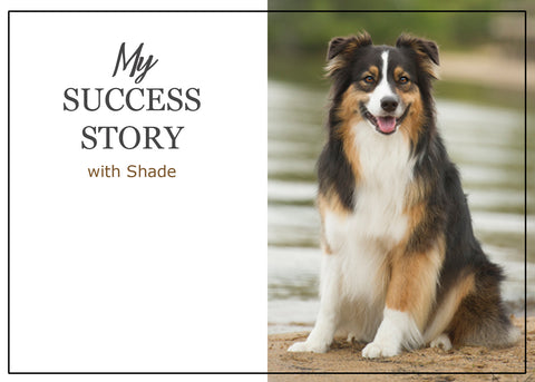 ParsleyPet Shade Success Story