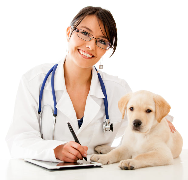 Holistic Veterinarian Phone Consultation