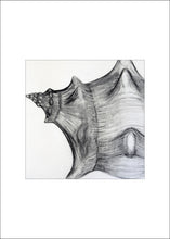 Load image into Gallery viewer, 4 Shell Notecards, made from The Shell Series, an original set of charcoal drawings