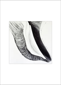4 Shell Notecards, made from The Shell Series, an original set of charcoal drawings