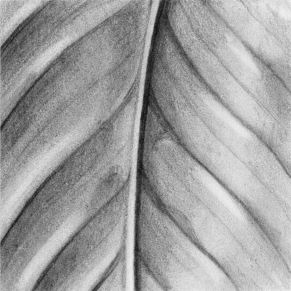 limited edition print of the texture series, a set hyperrealistic graphite drawings by Jane Nicolo