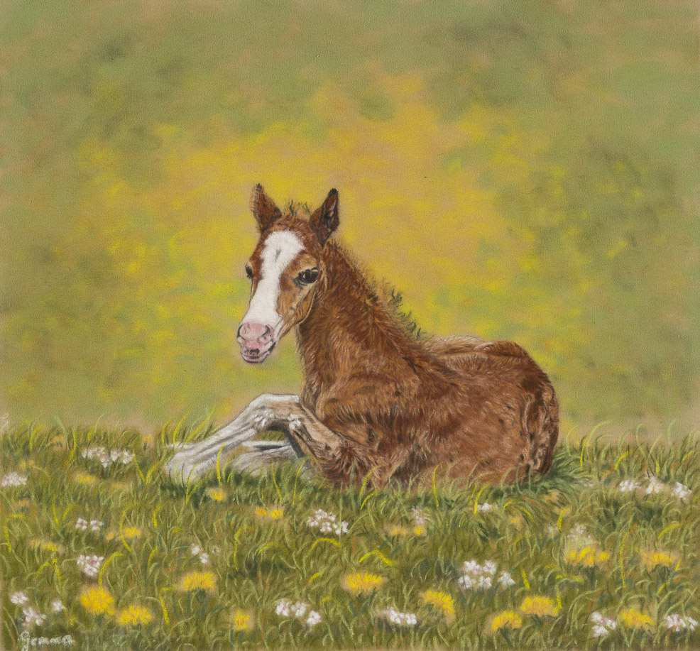 Foal in Summer Meadow