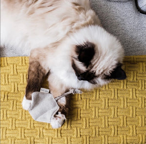 Cat Toy - Sting Ray