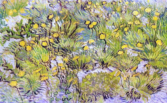 Vincent Van Gogh Field of Yellow Flowers - Canvas Art Print