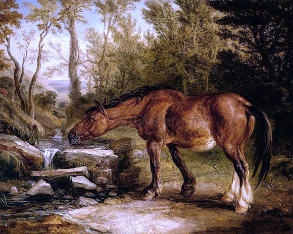 James Ward A Horse Drinking at a Stream - Canvas Art Print