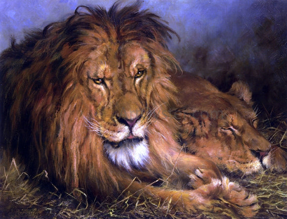 Geza Vastagh A Lion and Lioness - Canvas Art Print