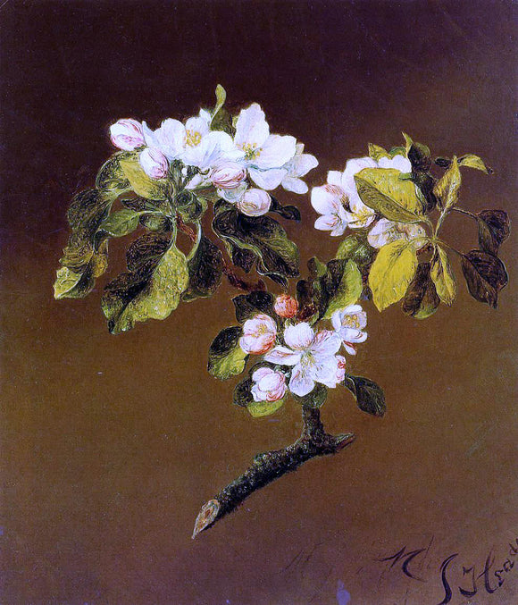 Martin Johnson Heade Spray of Apple Blossoms - Canvas Art Print
