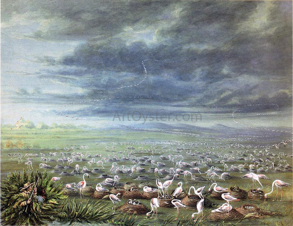 George Catlin Ambush for Flamingos in South America - Canvas Art Print