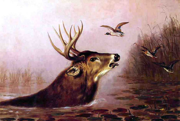 Arthur Fitzwilliam Tait A Deer in Marsh - Canvas Art Print