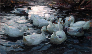 Alexander Koester Ducks Feeding - Canvas Art Print