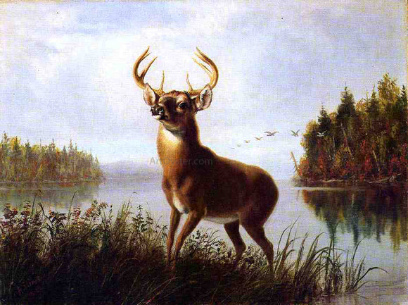 Arthur Fitzwilliam Tait An Eight Point Stag - Canvas Art Print