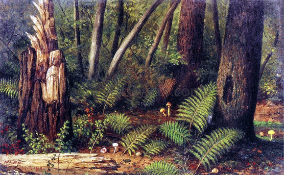 William Aiken Walker Forest with Ferns and Mushrooms - Canvas Art Print