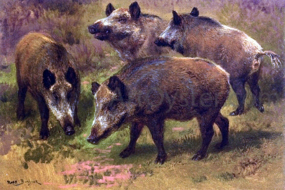 Rosa Bonheur Four Boars in a Landscape - Canvas Art Print