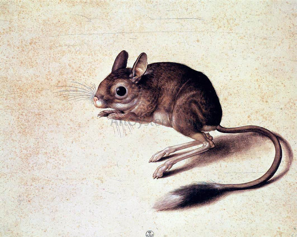 Jacopo Ligozzi Gerbil - Canvas Art Print