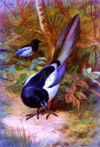 Archibald Thorburn Magpies - Canvas Art Print