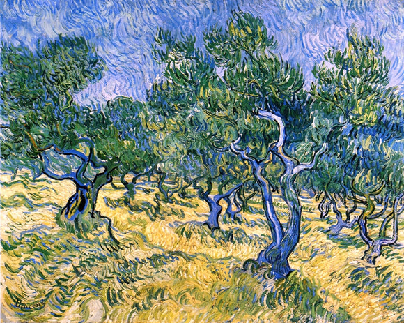Vincent Van Gogh Olive Grove - Canvas Art Print