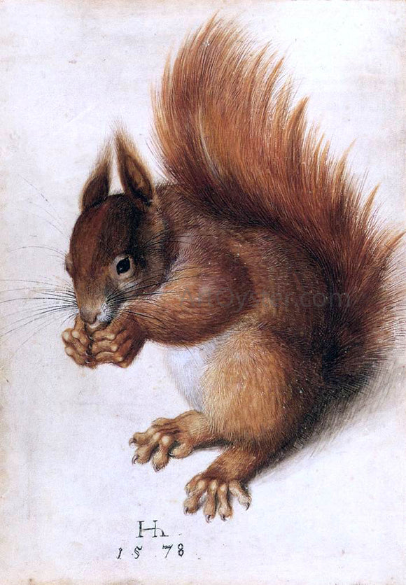 Hans Hoffmann A Squirrel - Canvas Art Print