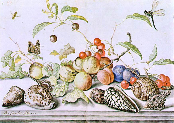 Balthasar Van der Ast Still-Life - Canvas Art Print