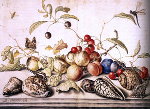 Balthasar Van der Ast Still-Life with Plums, Cherries, and Shells - Canvas Art Print
