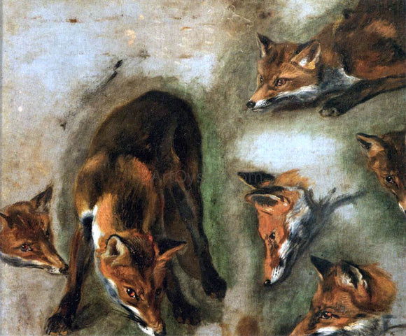 Pieter Boel Studies of a Fox - Canvas Art Print