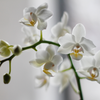 orchids & exotics flower subscription
