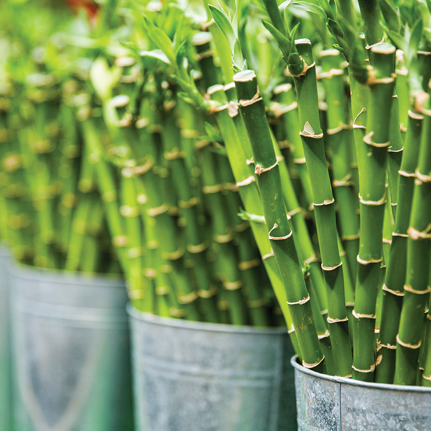 Ship the Bulbs & Bamboos subscription to Muscatine, Iowa