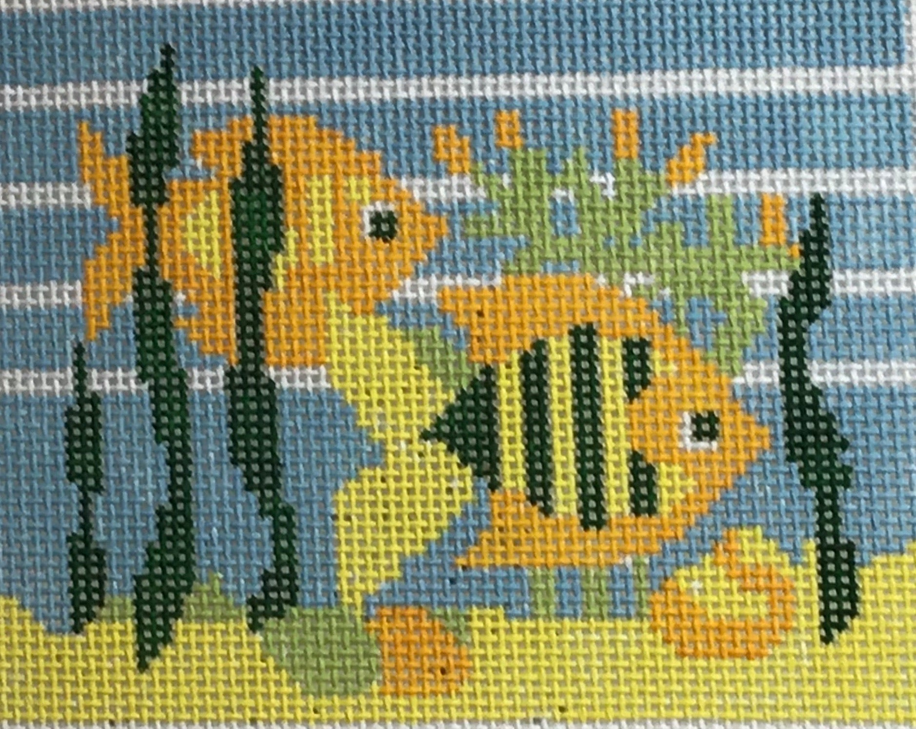 Yellow and green fish