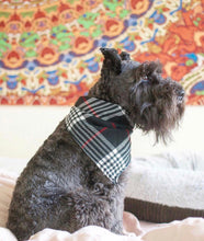 Load image into Gallery viewer, Furberry Premium Flannel Bandana - stellas-styles-studio