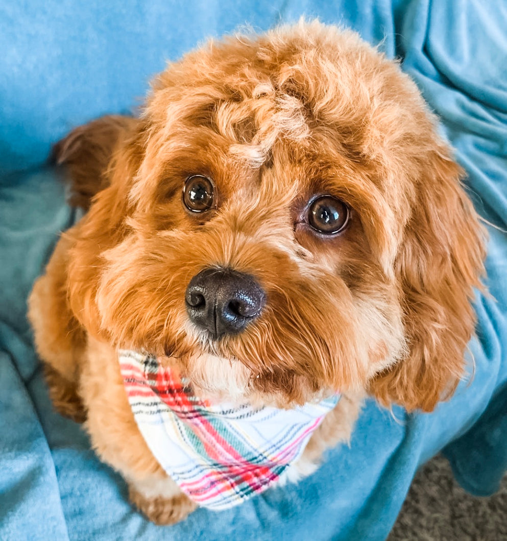 Apple Cider Premium Flannel Bandana