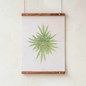 Botanical Cannabis Illustration